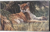 Last Sanctuary- Florida Panther (detail) Fine-Art Print