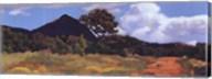 Summer Vista Fine-Art Print