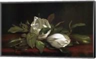 Magnolia Buds Fine-Art Print