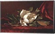 The Magnolia Flower Fine-Art Print