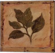 Solomon's Seal Fine-Art Print
