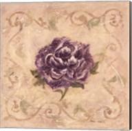 Paeonia De Lavendre Fine-Art Print