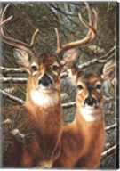 Among the Pines Fine-Art Print