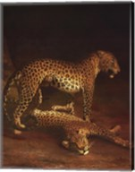 Two Leopards Playing In The Exeter Chang Fine-Art Print