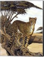 Cheetah Gazing Fine-Art Print