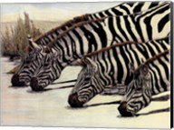 Four Zebras Drinking Fine-Art Print