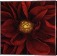 Splendor - Red Pool Fine-Art Print