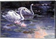 Swans and Waterfall Fine-Art Print