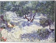 Olive Orchard Fine-Art Print