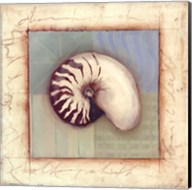 Shell Accents II Fine-Art Print