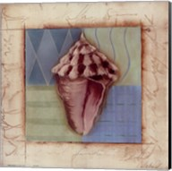 Shell Accents I Fine-Art Print