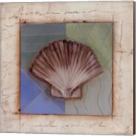 Shell Accents IV Fine-Art Print
