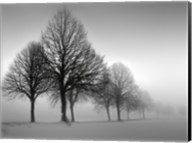 Winter Trees III Fine-Art Print