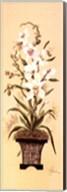 Orchid II Fine-Art Print