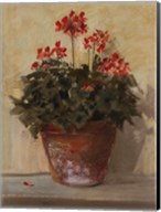 Potted Geraniums I Fine-Art Print