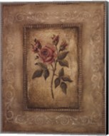 Savin Rose - Mini Fine-Art Print