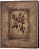 Grand Savin Rose Fine-Art Print