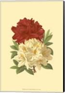 Blooming Azalea II Fine-Art Print