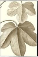 Cropped Sepia Botanical III Giclee