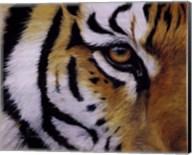 Eye of the Tiger Fine-Art Print