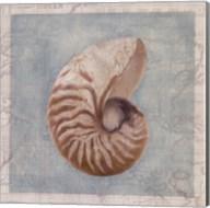 Framed Shells I Fine-Art Print
