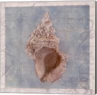 Framed Shells II Fine-Art Print