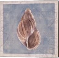 Framed Shells IV Fine-Art Print
