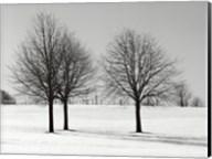 Silhouettes Of Winter I Fine-Art Print