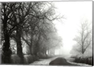 Misty Tree-Lined Road Fine-Art Print