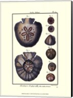 Sea Shells V Fine-Art Print