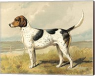 Fox Hound Fine-Art Print