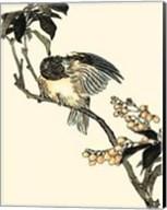 Oriental Bird On Branch V Fine-Art Print