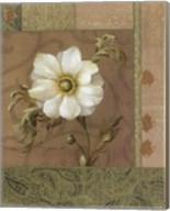 Summer Anemone Fine-Art Print