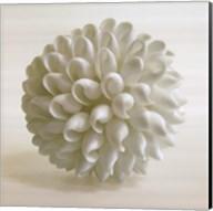 Shell III Fine-Art Print