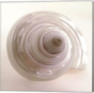 Shell IV Fine-Art Print