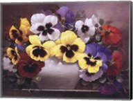 Rainbow of Pansies Fine-Art Print