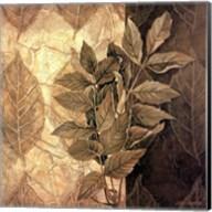 Leaf Patterns IV Fine-Art Print