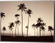 Platinum Palms II Fine-Art Print