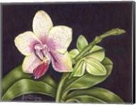 Vibrant Orchid II Fine-Art Print