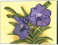 Vibrant Orchid III Fine-Art Print