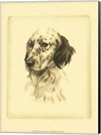 Printed Danchin Setter Fine-Art Print