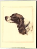 Printed Danchin Cocker Spaniel Fine-Art Print