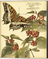 Mini Whimsical Butterflies II Fine-Art Print
