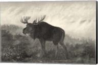 American Moose Fine-Art Print