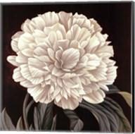 Full Bloom II Fine-Art Print
