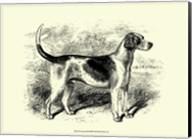 Foxhound Fine-Art Print
