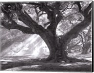 Andrew Oak, Afternoon Light Fine-Art Print