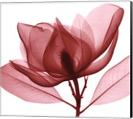 Red Magnolia I Fine-Art Print