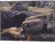 Boulder Bruin Fine-Art Print