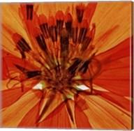 Pressed Flower Abstract #1 Fine-Art Print